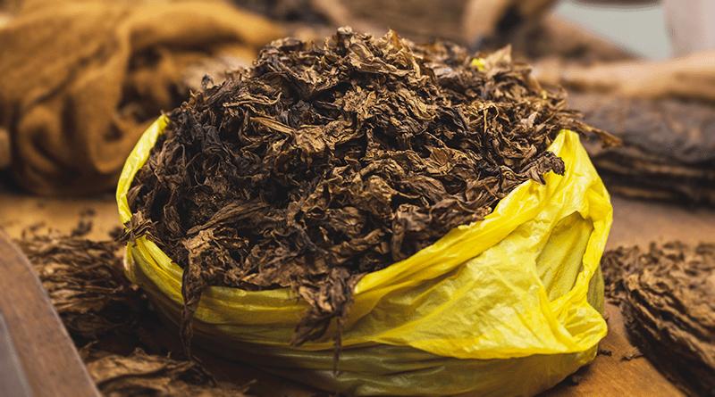 sušené tabakové listy v mikroténovom vrecúšku tabak