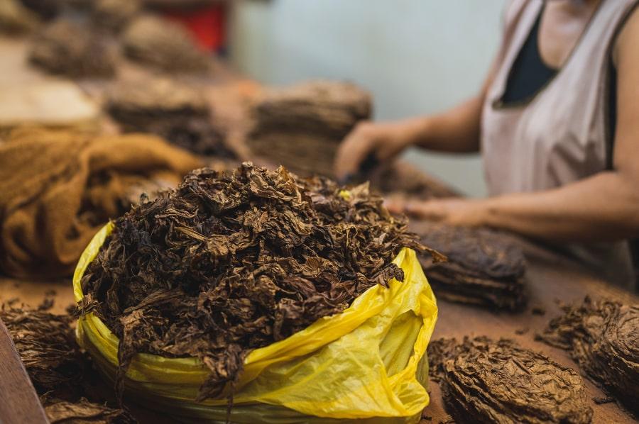strucna historia tabaku, kolubus a tabak smokemag-min